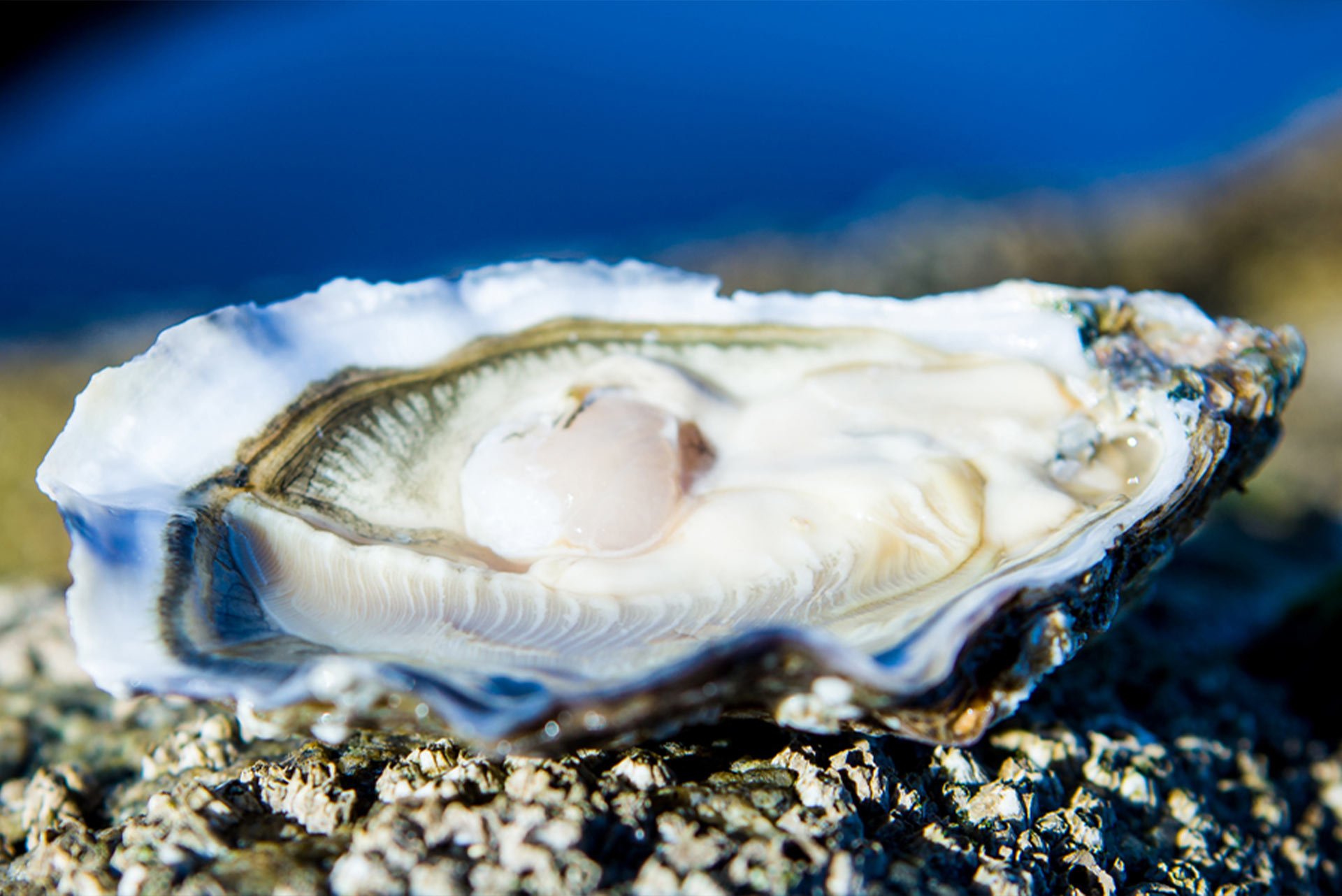 Carlingford Oyster Company